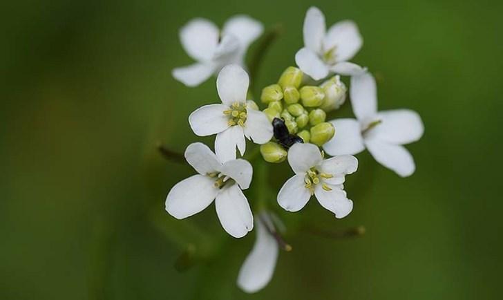 porque-florecen-las-flores-en-primavera