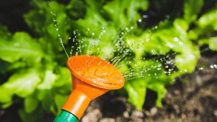 Consejos para regar correctamente las plantas