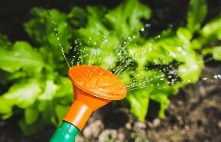 consejos-para-regar-las-plantas
