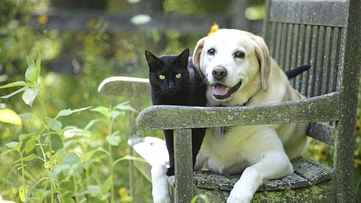 Plantas peligrosas e inofensivas para las mascotas