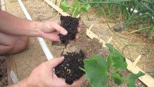 trasplante-de-plantas