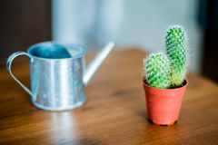 cactus-watering-tool-table-34762443