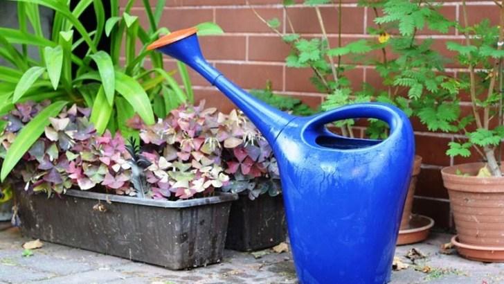Otoño, cuida tus plantas