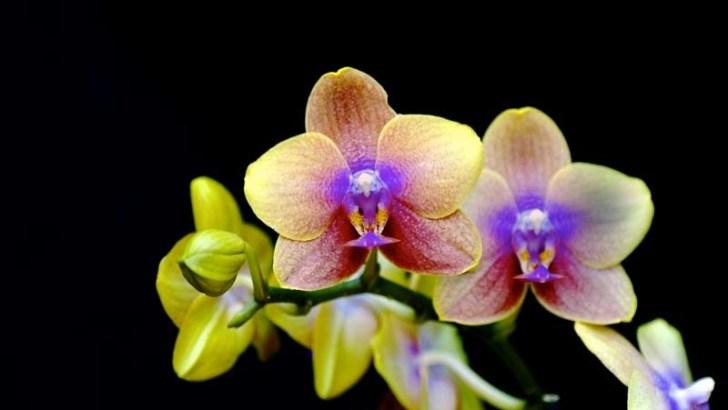 Orquídeas – Curiosidades