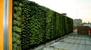 Qué son los jardines verticales