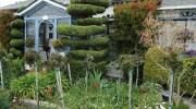 Fertilizar nuestras plantas, 3 idéas
