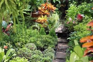 jardin-con-plantas
