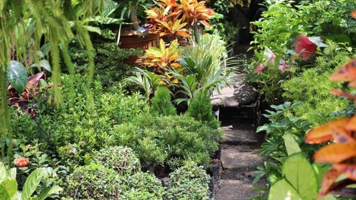 La importancia de la humedad en las plantas