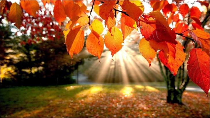 Tareas de jardín en otoño: renovar y proteger