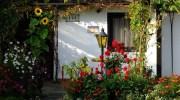 Tips para comenzar en un jardín