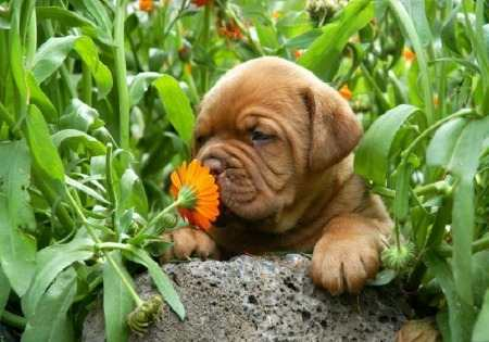 10 plantas tóxicas para mascotas