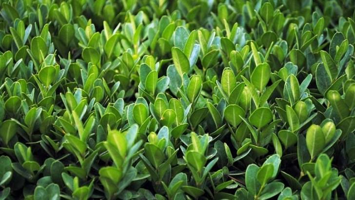 Las plantas absorben cada vez más CO2