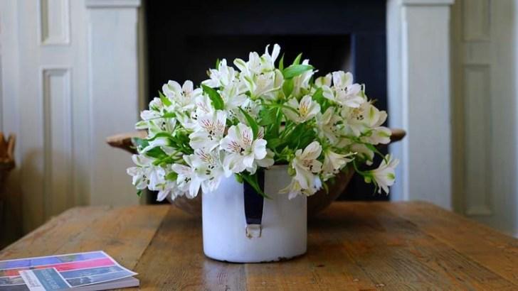 flores-de-interior