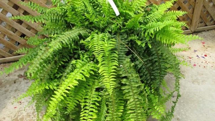 3 plantas para purificar el aire del hogar