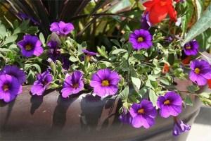 maceta-con-flores