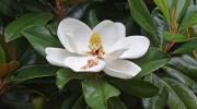 Nuevas especies de plantas descubiertas