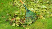 Abril: tareas del jardín