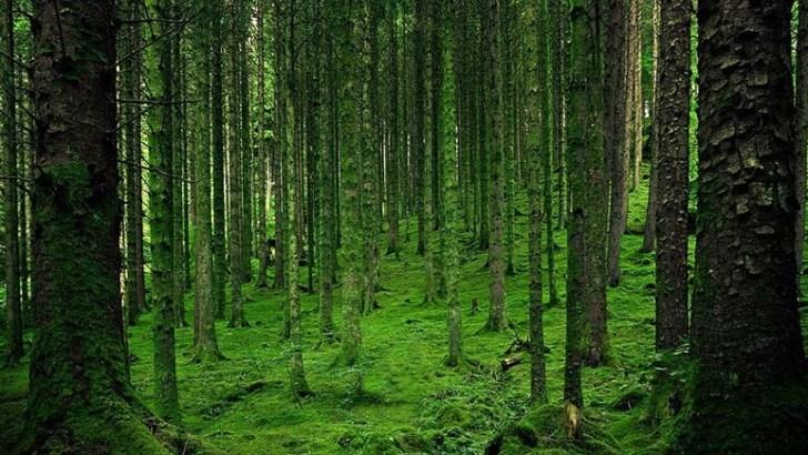La biodiversidad es necesaria para los ecosistemas terrestres