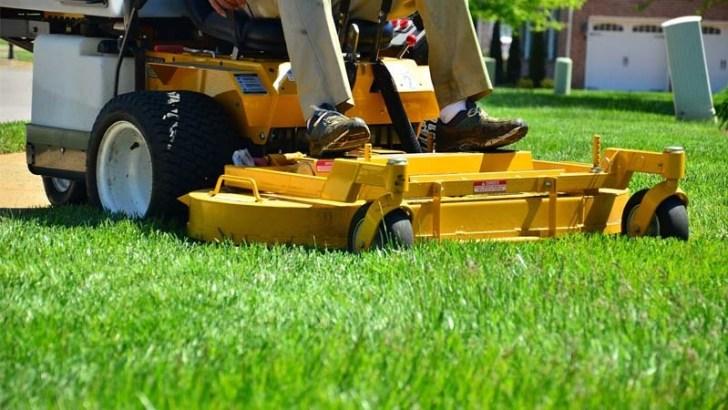 Consejos express para el cuidado de tu jardín