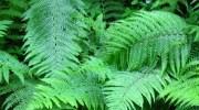 El poder de las plantas según el Feng Shui