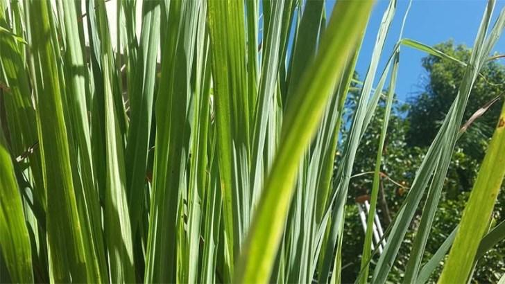 Plantas de las que puedes sacar un gran provecho