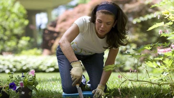 Tips para novatos en el jardín