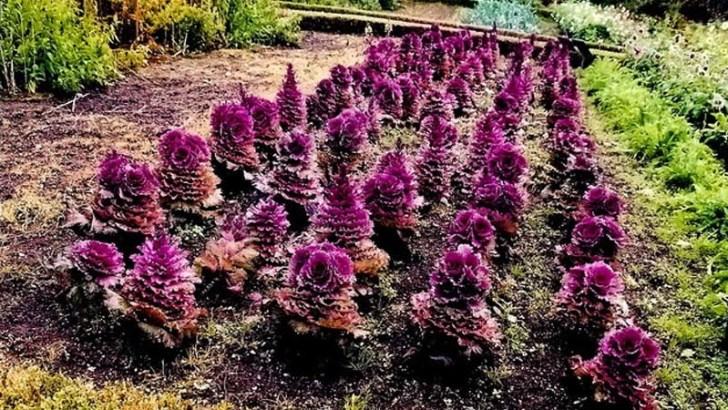 plantas-de-jardin