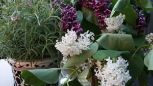 plantas-estilo-feng-shui