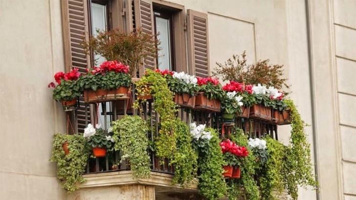 Plantas y flores para ahuyentar a las avispas