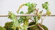 Kokedama, arte japonés de plantas sin macetas