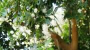 La promiscuidad de las plantas puede salvarlas