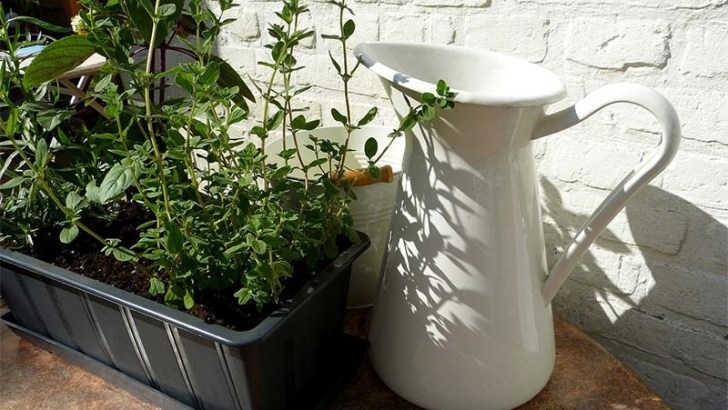 Consejos para cuidar tus plantas en macetas