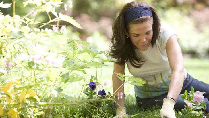 Beneficios de la terapia hortícola