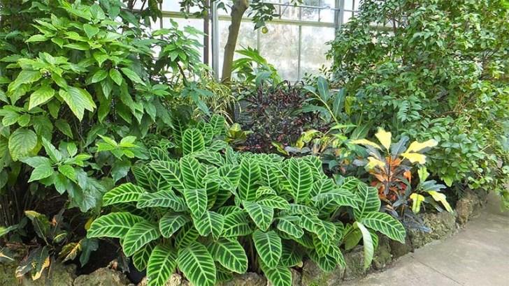 La importancia del hierro en las plantas