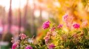 Consejos para crear tu jardín