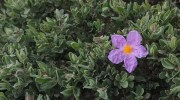 Las plantas se ponen a dieta para combatir la sequía
