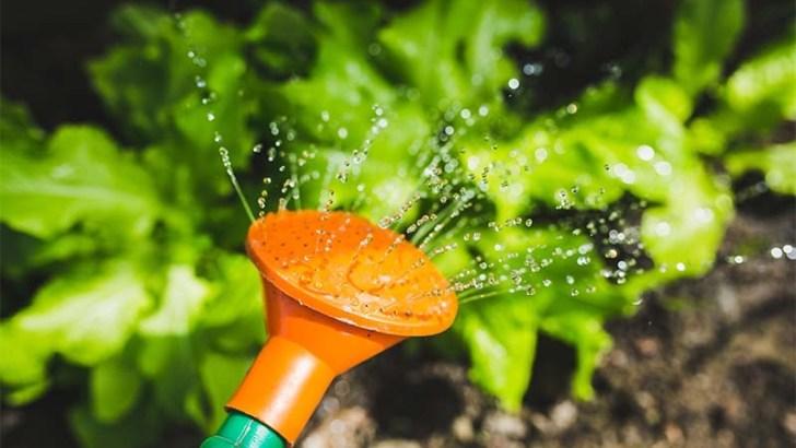 Riega tus plantas correctamente en verano