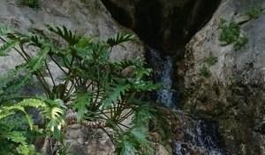 Jardín Exótico de Eze