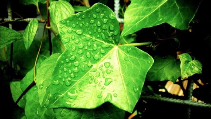 Trucos para el cuidado de tus plantas
