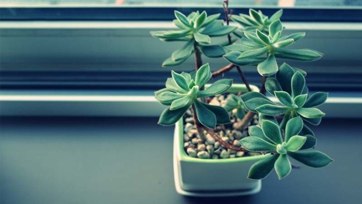 Productos caseros para mejorar el aspecto de las plantas