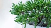 El curioso crecimiento de las plantas
