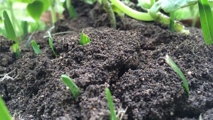 ¿Se debe usar siempre la misma tierra para plantas?