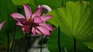 planta-con-flor