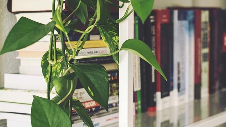 Sequedad y humedad, las señales de las hojas