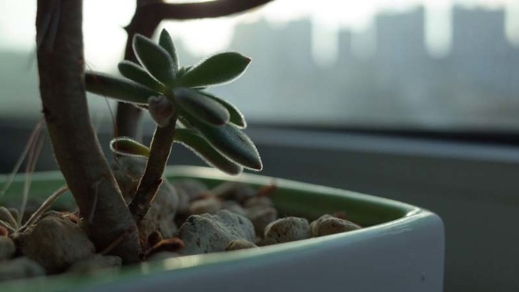 Trasplantar una planta es fácil