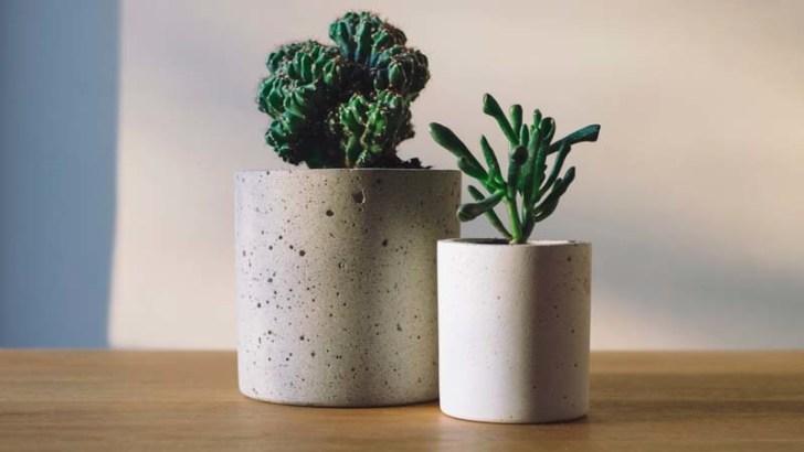 plantas de escritorio