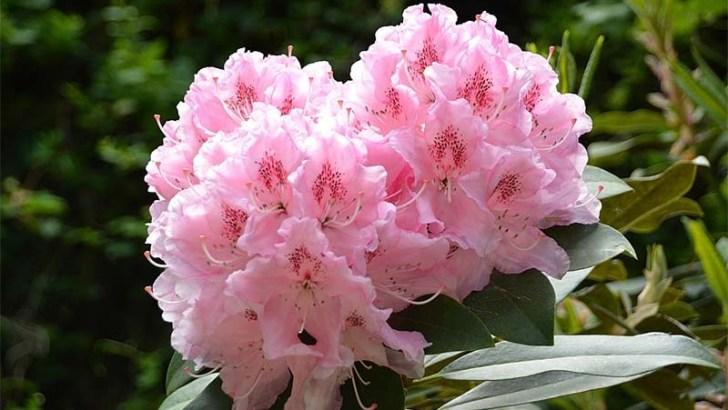 5 Plantas resistentes al frío para tu jardín