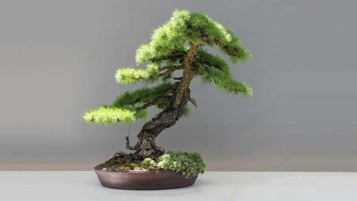 Información práctica sobre el bonsái