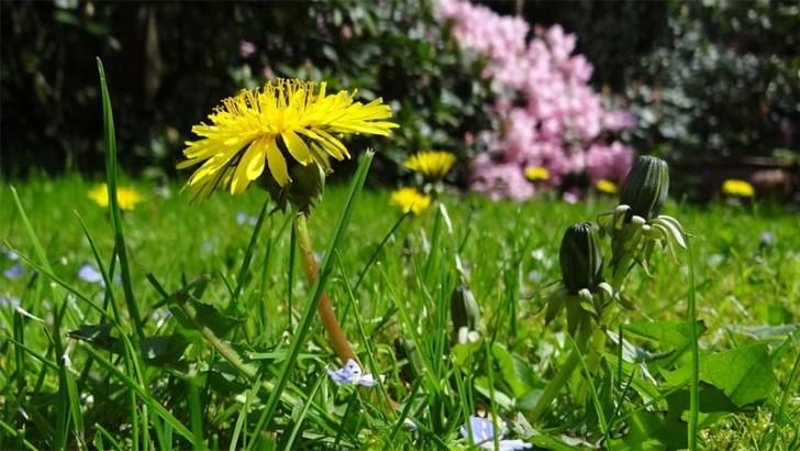 Otoño: cuidados del jardín