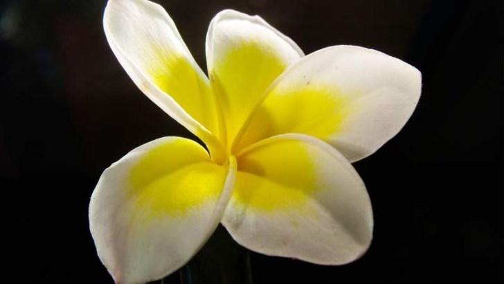 La orquídea, maestra del camuflaje